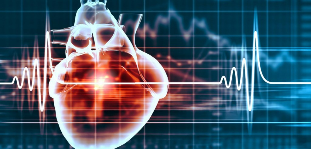 heart-and-cardiogram-copy